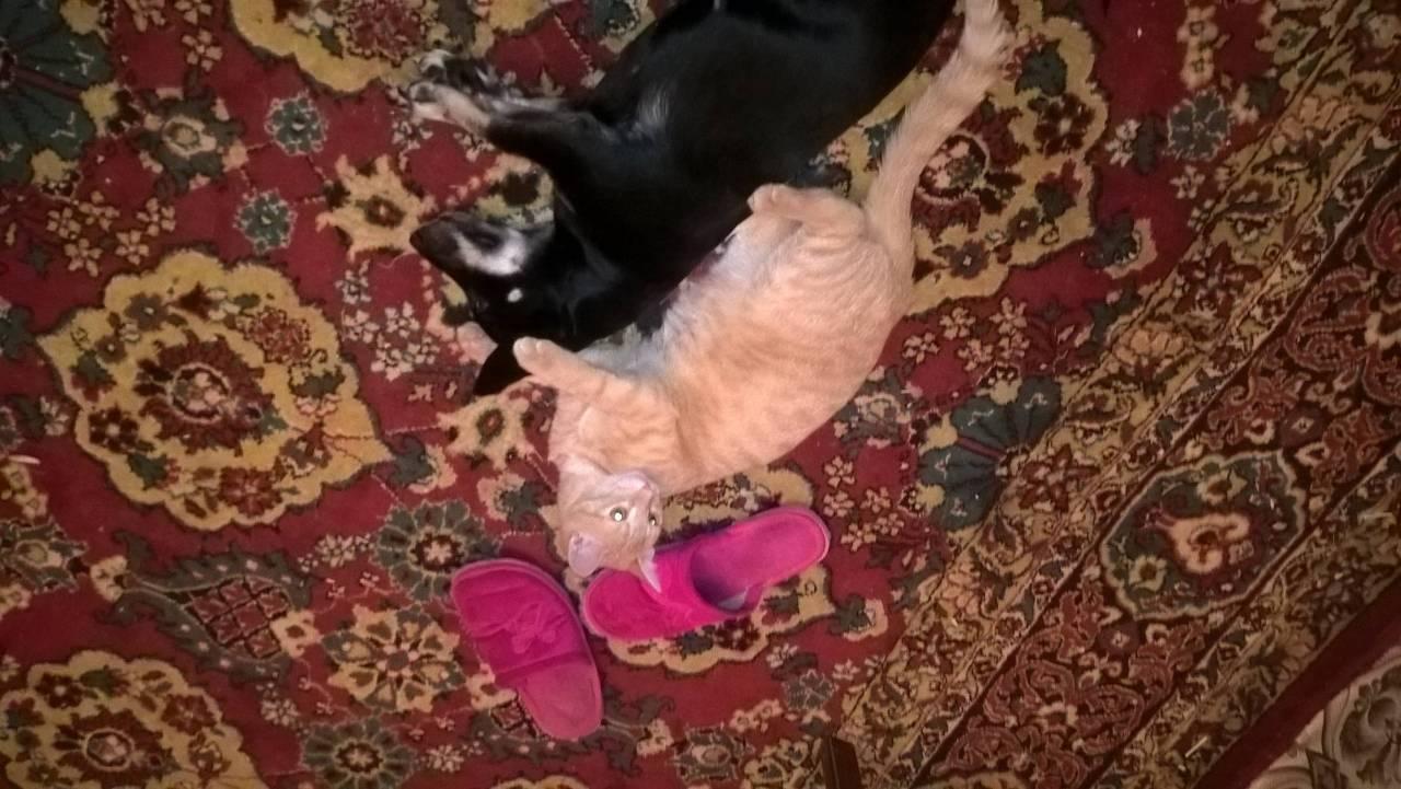 Рыжик и Аська балдеют лежат!!! foto nadyxa
