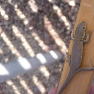 Фотография glava1_6: Увидел вот какую ящерицу