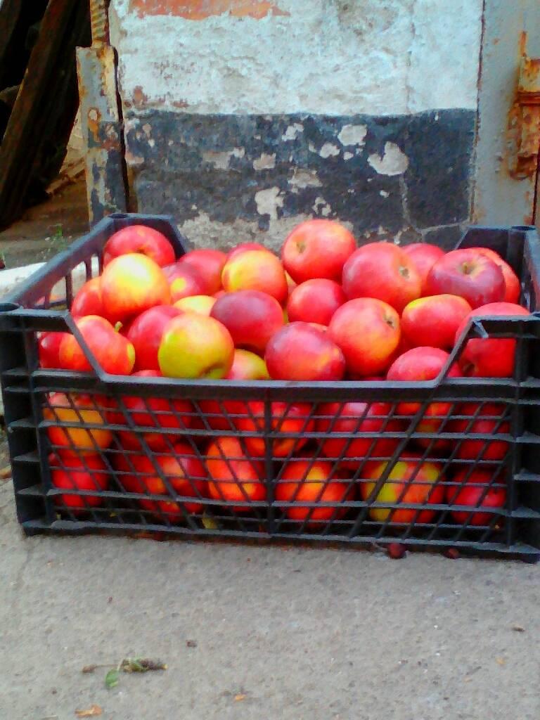 яблоки фотография Николай
