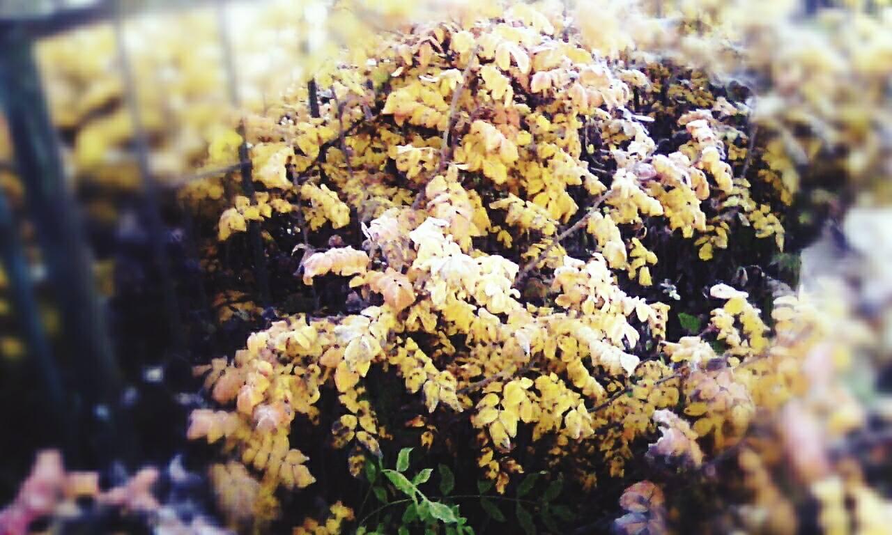 Осінь... photo Pavlo