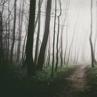 Photo Vitaly : #wood #green #black