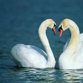 Фотография ekaterina: Они такие красивые. Ассоциируются с самым светлым чувством-любовь.
