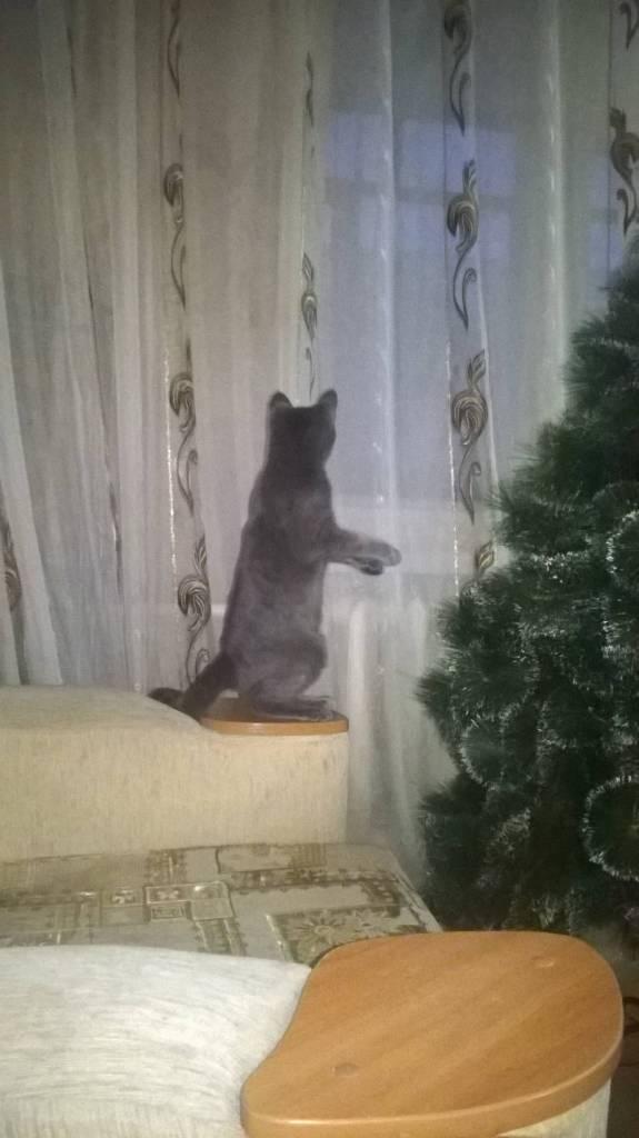 Сусло кошка фотографія Илья