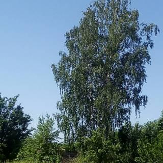 Фотография zldy на InCamery.Ru