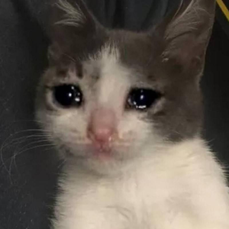 бедный котик photo Лена
