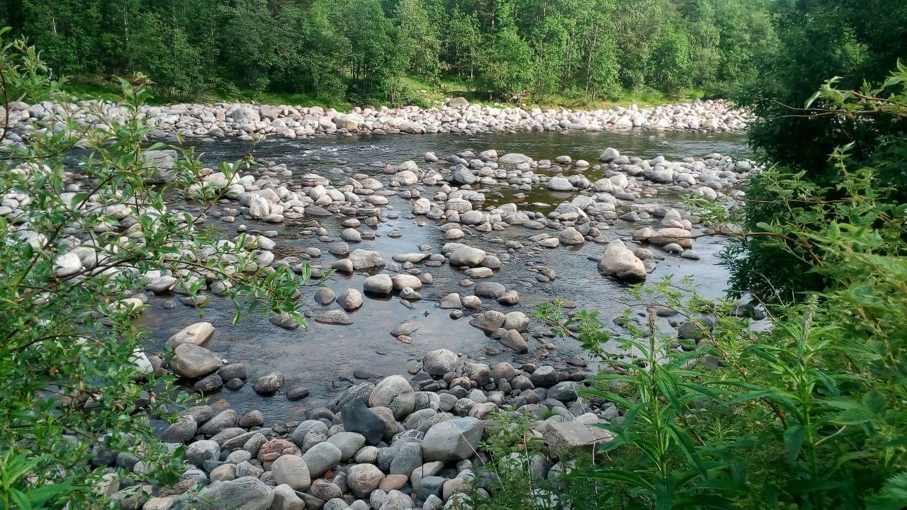Река Нива. photo Поля