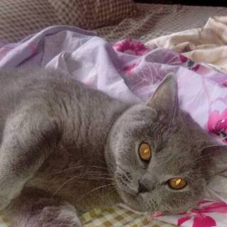 Фотография люба: кот обормот