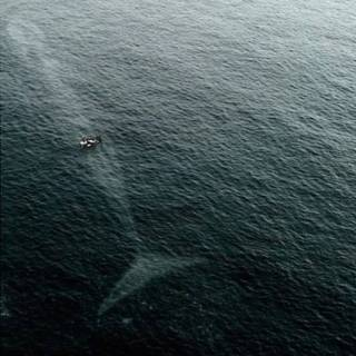 Photo Vitaly : #Whale #sea
