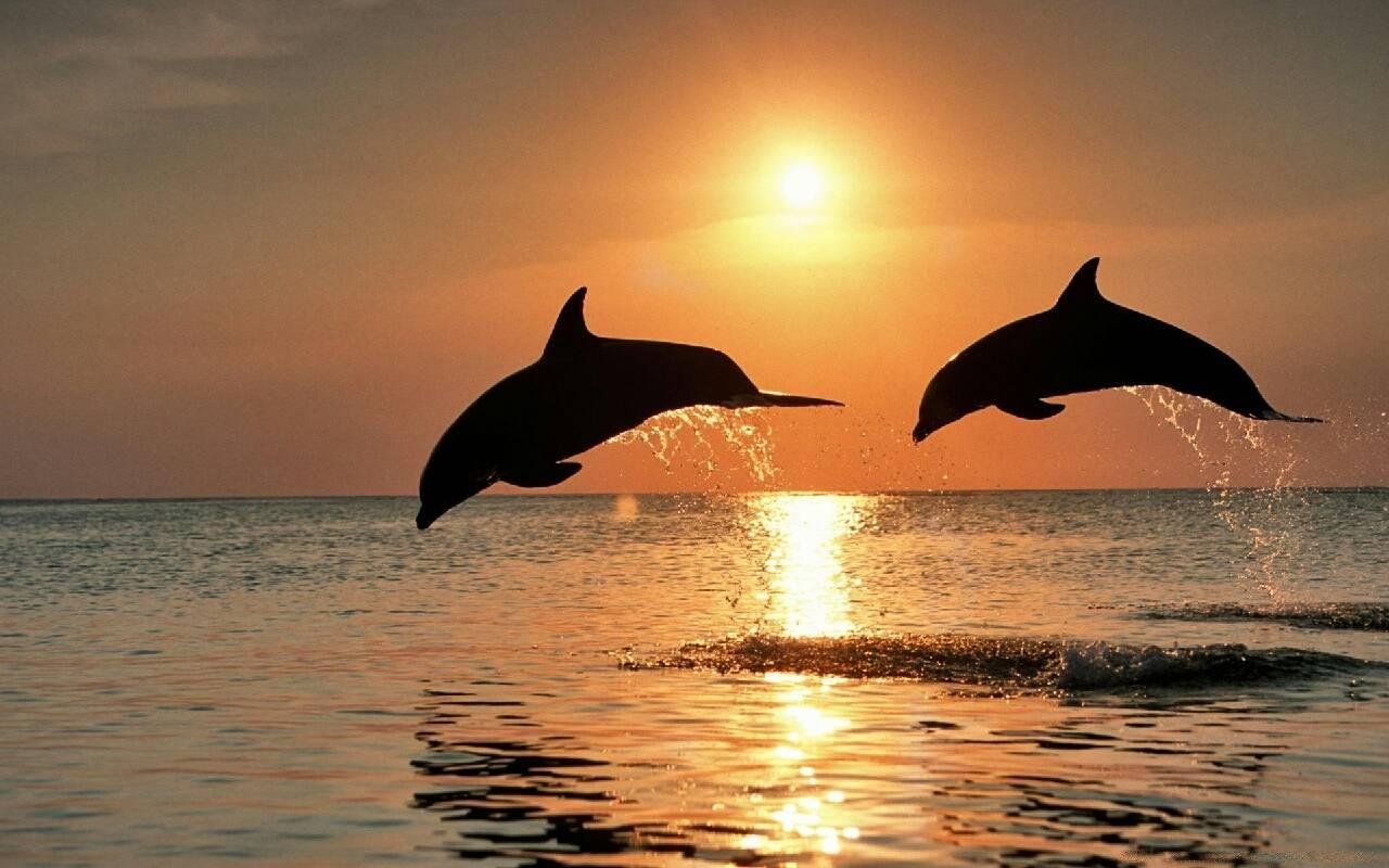 море это жизнь foto elena