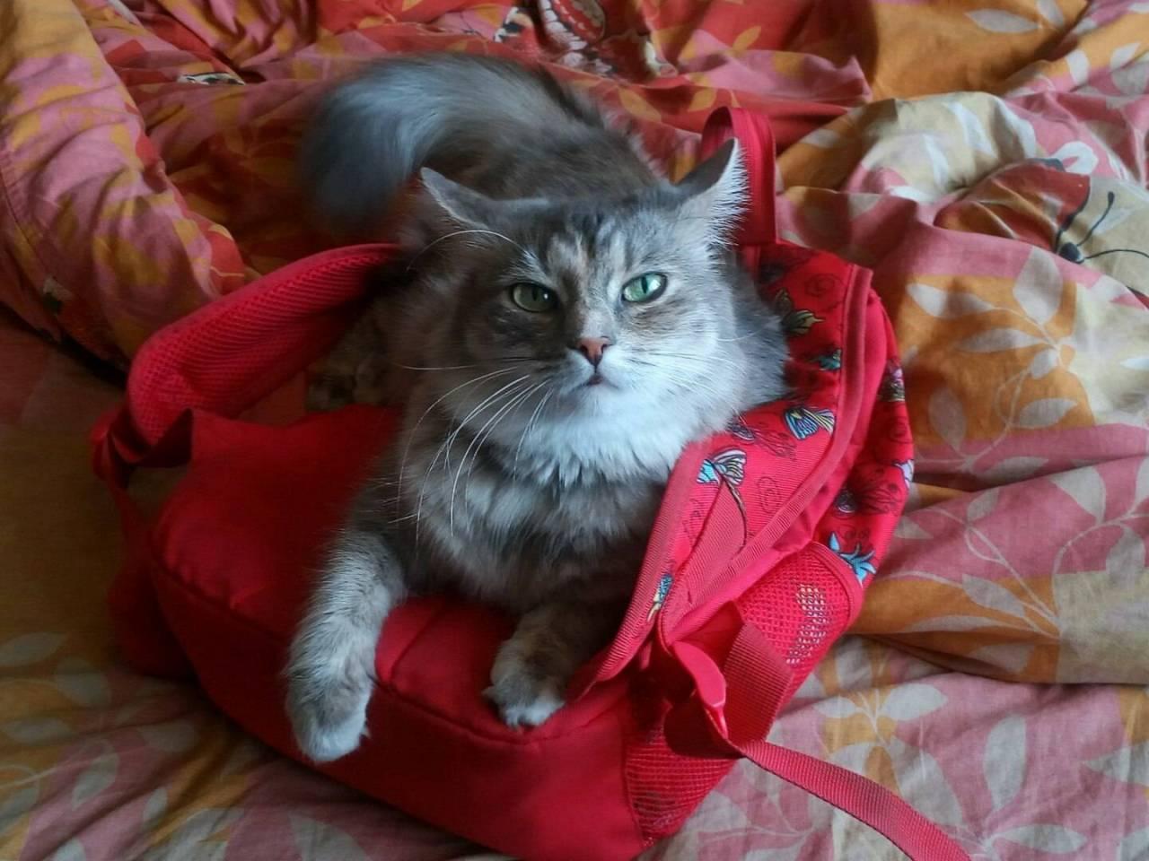 Киса. photo Поля