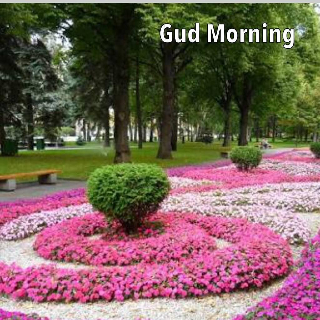 #GoodMorning photo Ashish Babbar