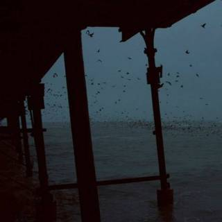 Фотография Vitaly : #bridge #sea #birds