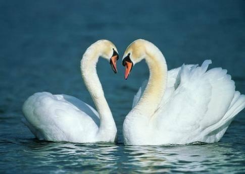 Они такие красивые. Ассоциируются с самым светлым чувством-любовь. фотография ekaterina