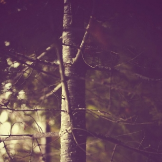 Фотографія Vitaly : #wood #purpur #black
