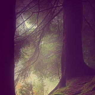 Фотографія Vitaly : #wood #green #purple #black