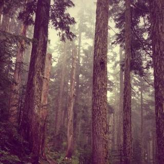 Фотографія Vitaly : #wood #purpur