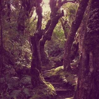 Фотографія Vitaly : #wood #black #purple #green