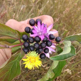 Фотография Илларион: дикие растение