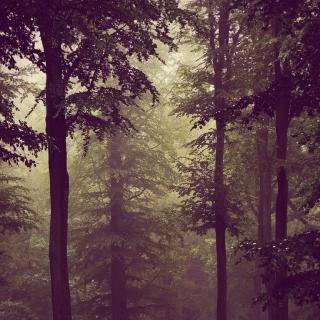 Photo Vitaly : #wood