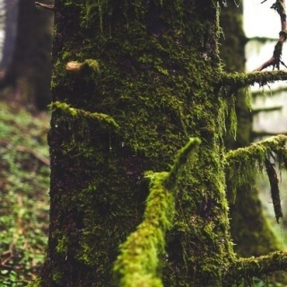 Фотографія Vitaly : #wood #green #white #black