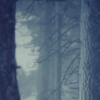 Фотографія Vitaly : #wood #white #blue #black