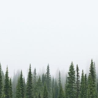 Photo Vitaly : #wood #pleasure #white #green