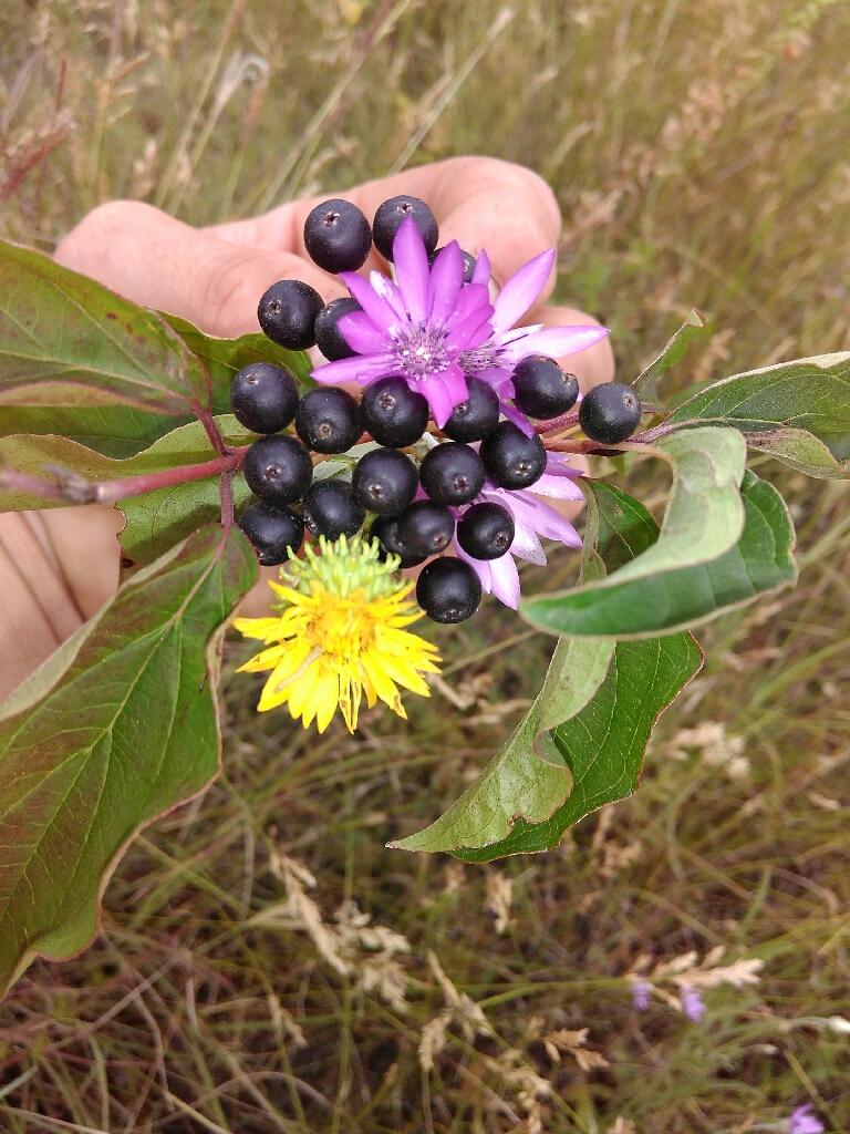 дикие растение фотография Илларион