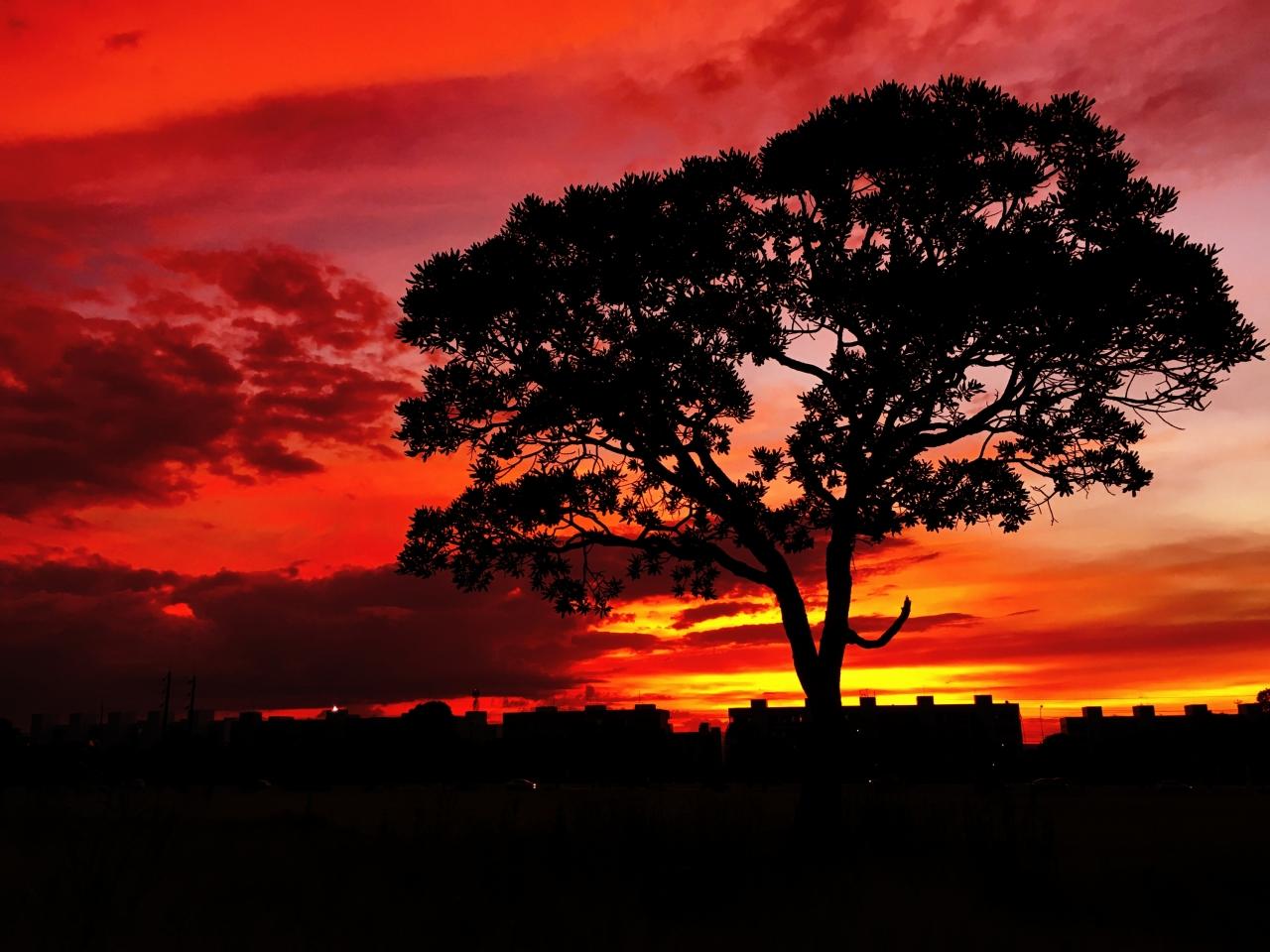Красивый красный закат, дерево photo Alexander