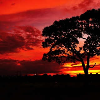 Фотография Alexander: Красивый красный закат, дерево