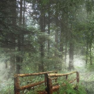 Фотографія Vitaly : #wood #green #white #brown