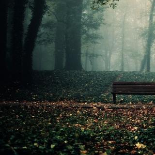 Фотографія Vitaly : #wood #Bench #darkness #green #brown #black