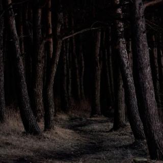 Фотографія Vitaly : #wood #black #brown