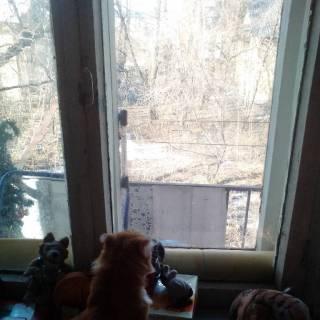 Фотография Александр Федров: #кот#кошка#кате#катята #любимые жывотные