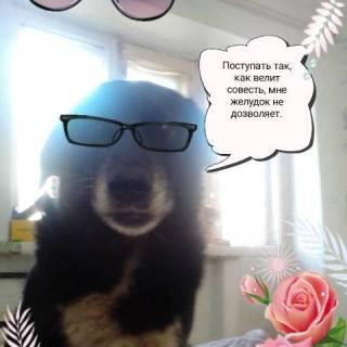 Фотография Александр Федров: #собака#пес#как вам
