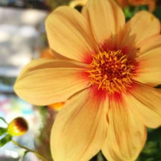 Фотография Илья: Яркий осенний цветок