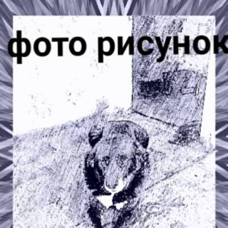 Фотография Александр Федров: пес