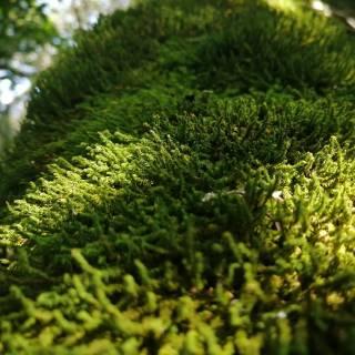 Фотография Полина Романенко: Прогулка в лесу