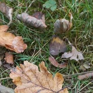 Foto youlya: осень