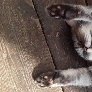 Фотография Sergei: спящая кошка