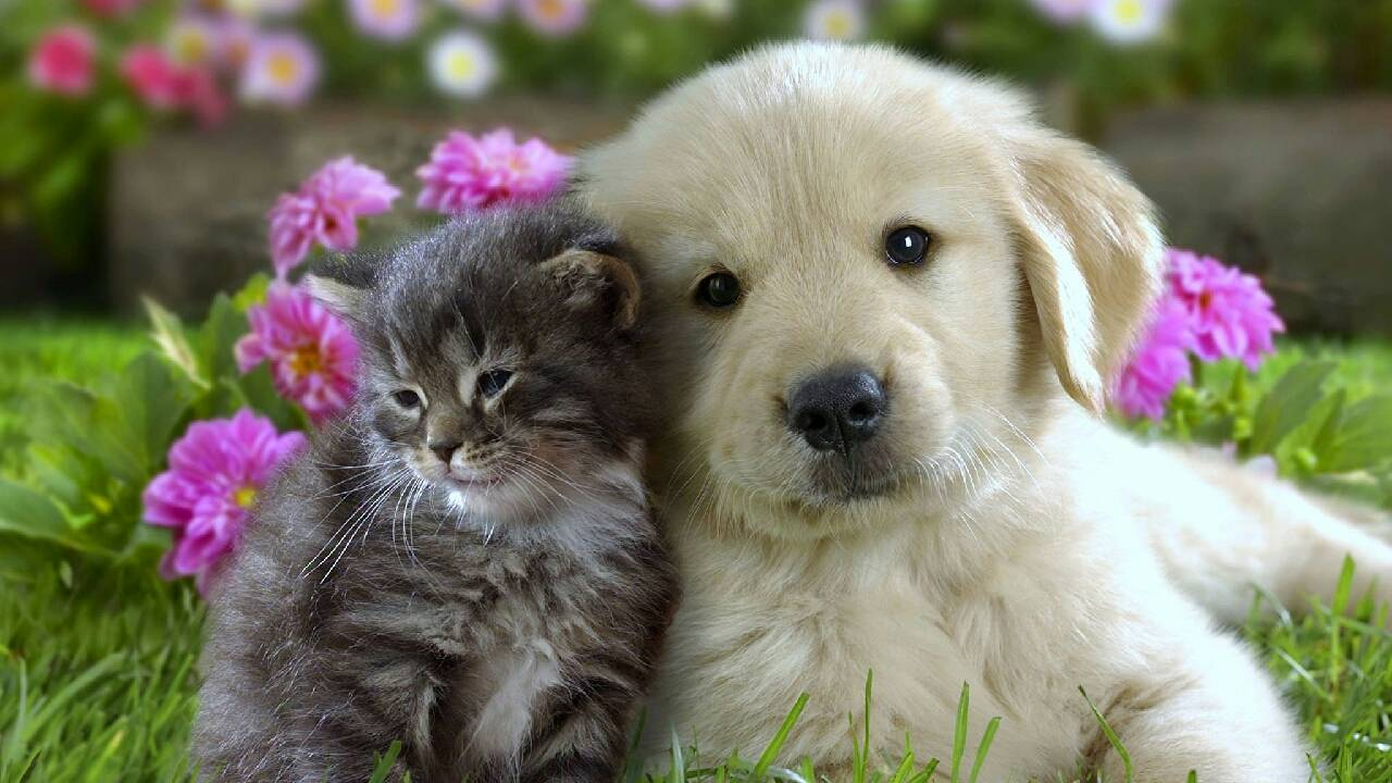 милые щенок и котенок photo elena