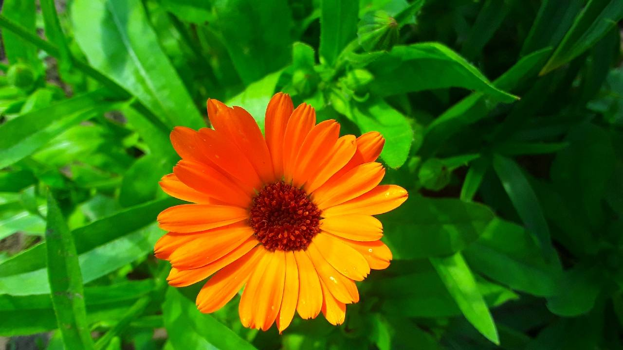 оранжевый цветок foto Sergei