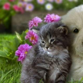 Фотография elena: милые щенок и котенок
