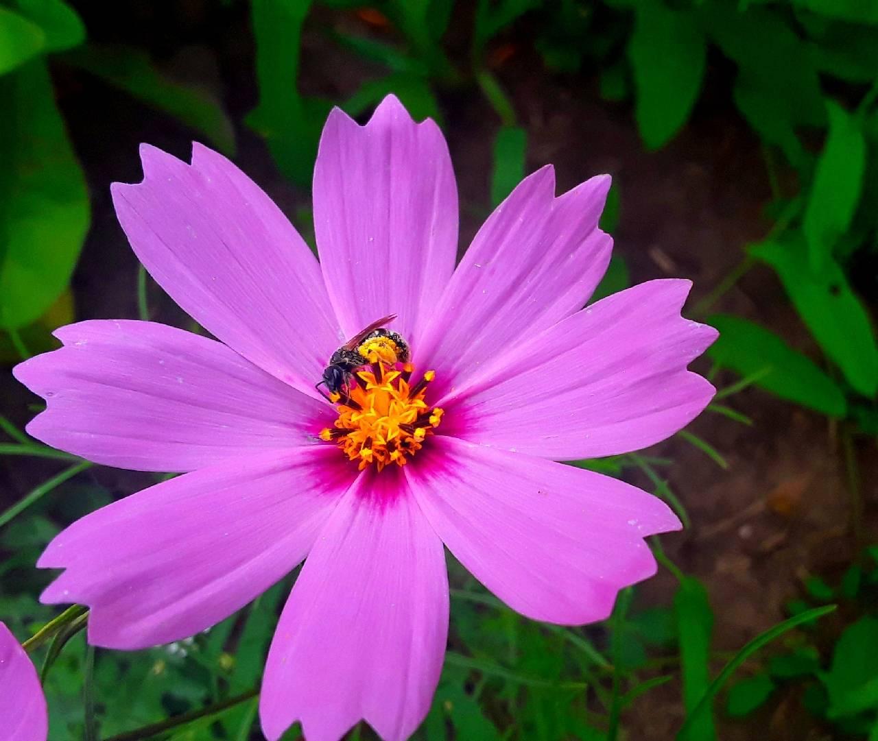 пчела на цветке photo Sergei