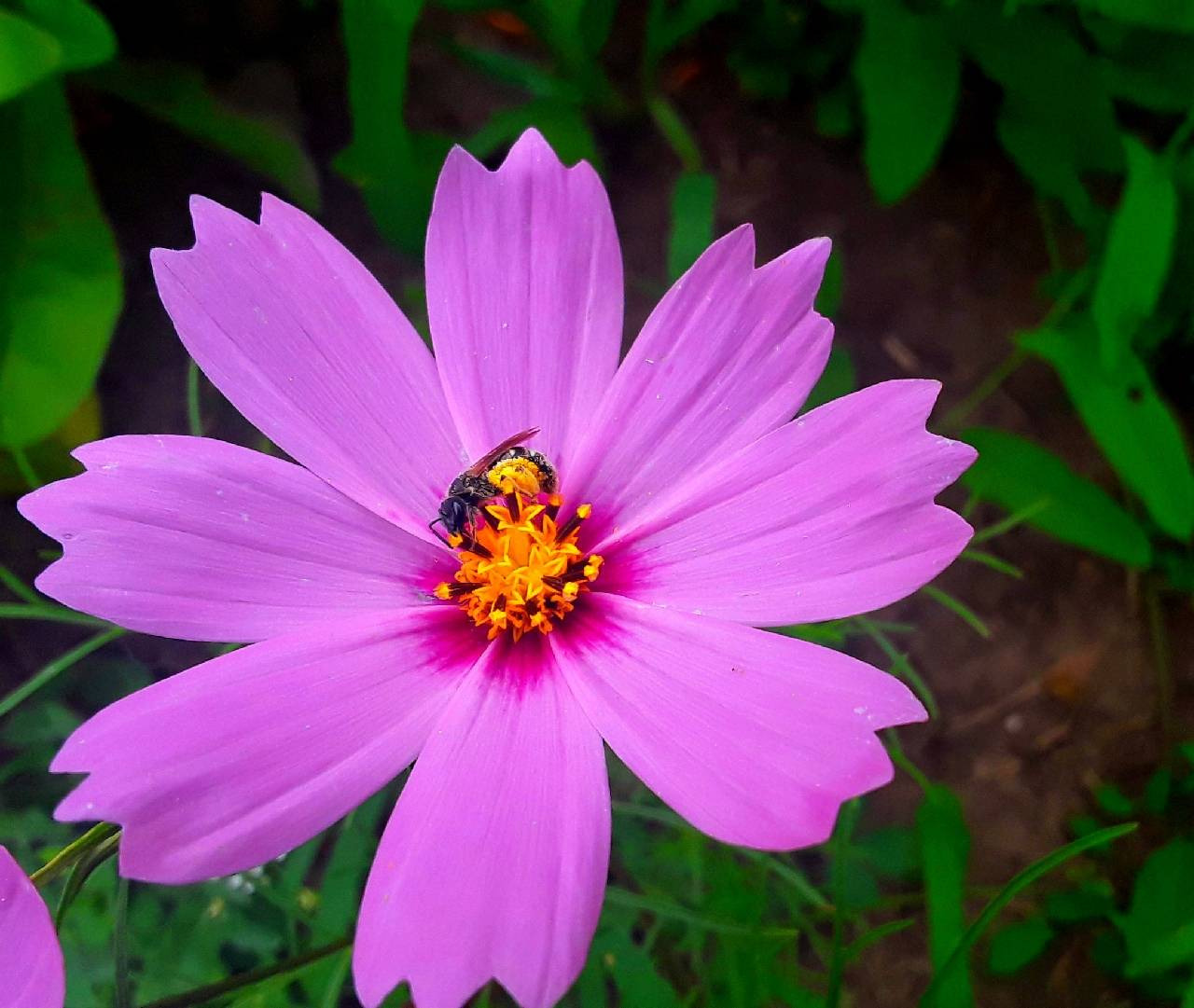 пчела на цветке фотография Sergei