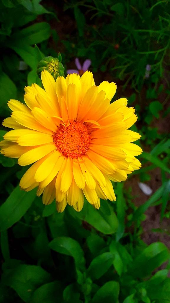 желтый цветок foto Sergei