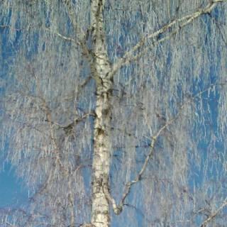 Foto max: Winter
