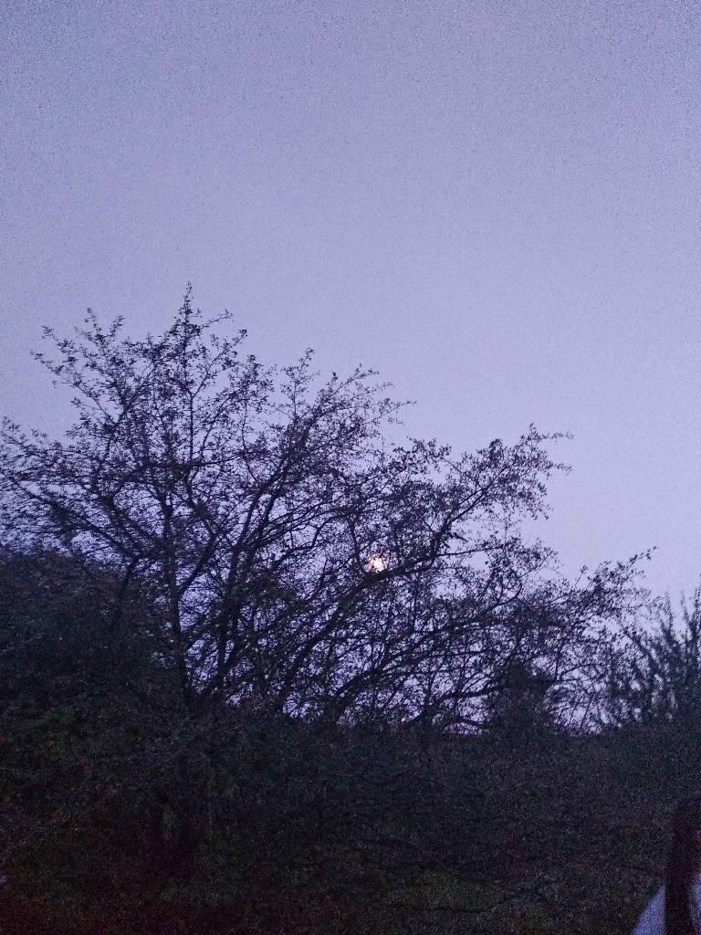 #вечір фотография amone
