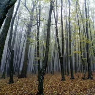 Фотографія Anastasia : #туман