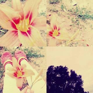 Photo юля: Цветок