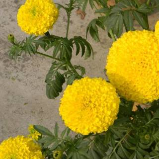 Фотография kunal: flower